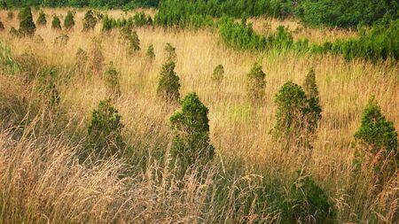 marsh plant: Il giallo piantare alberi di palude