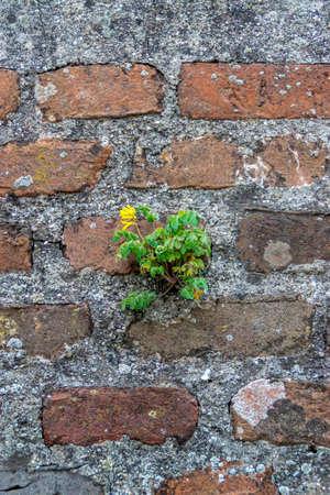 Plant on wall Фото со стока