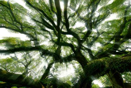 Banyan tree under the sun Imagens
