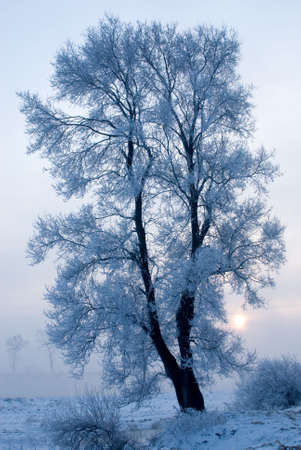 Rime in rime lsland at northeast china Stock Photo