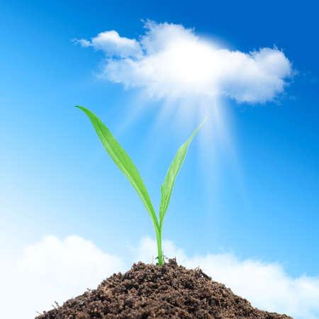 green leaf on blue sky background