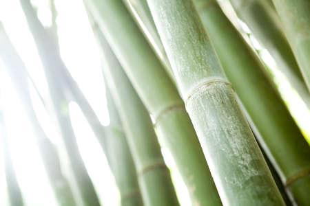 bamboo forest  Standard-Bild