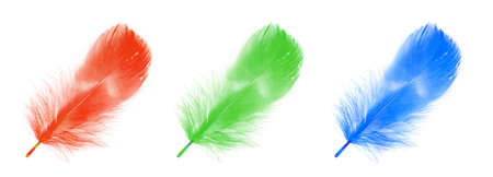 falling feather: colorful feather with reflection