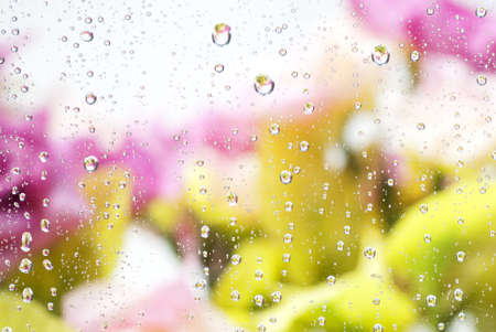 water drops on flowers background