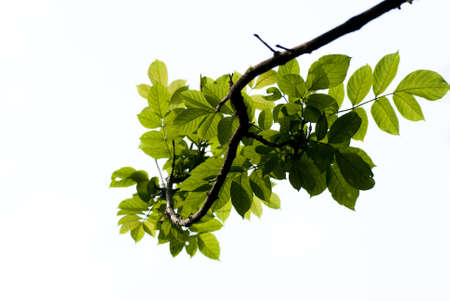 maintained: Beautiful green leaves
