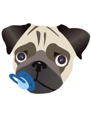 pezones: Pug raza del perro. Puppy pezones Ni�o en la boca.