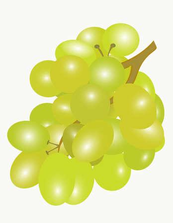 Brush tasty white grapes. Vector.