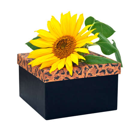 Gift box with flower sunflower isolated on a white background. photo