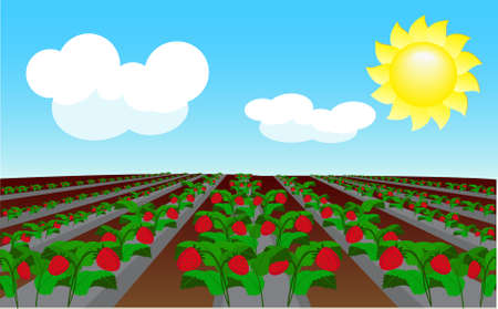 Strawberry field  Stock Vector - 8312208