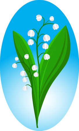 may lily:  Lily of the valley