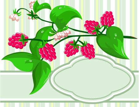 summer diet: Sprig Raspberry Illustration