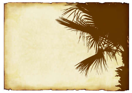 palm tree leaves: old paper background with elements of ornamentation