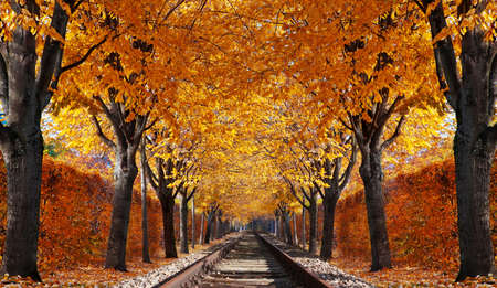 forest railroad: Abandoned railroad in autumn forest