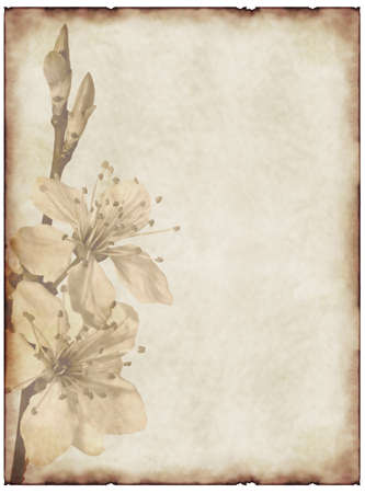 old paper background with cherry blossom photo