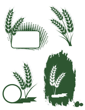 Set with green ears of wheat Vector