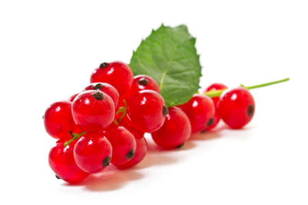 Red currants on a white background   Stock Photo