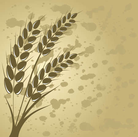 agriculture wallpaper: Ear of wheat in the beige background