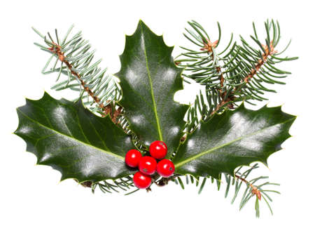 holly leaves and berries isolated on a white background  Stock Photo - 15708589