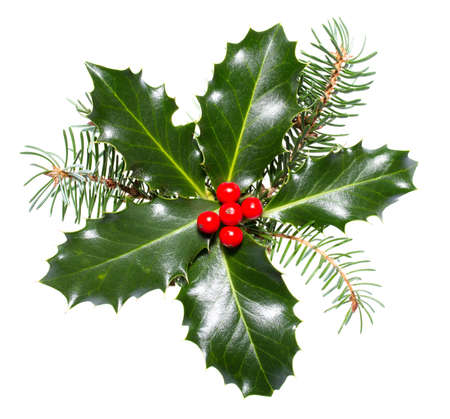 holly berry: holly leaves and berries isolated on a white background