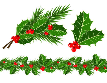 holly leaves: holly leaves and berries  Illustration