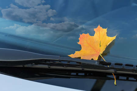 autumn leaf on a car windshield photo