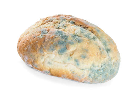 Bread covered in mold  Isolate on white