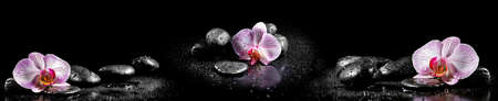 Horizontal panorama with pink orchids and zen stones on black background photo