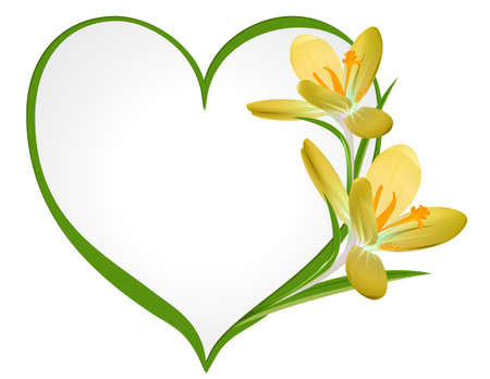 Yellow crocus with a frame in the shape of heart  Vector