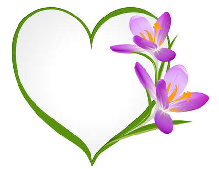 Purple crocus with a frame in the shape of heart  Vector