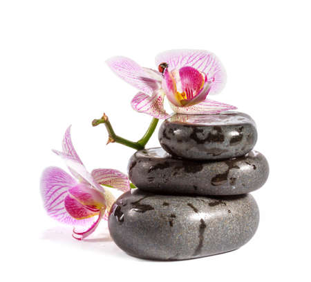 Zen stones with orchid and ladybird  Isolated on white background  photo