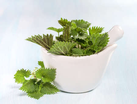urtica: Fresh nettle leaves on a wooden table