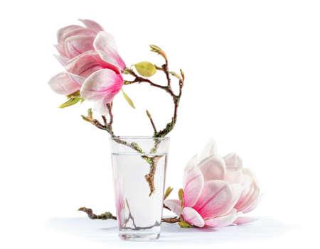blooming magnolia photo