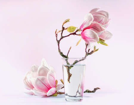 Still life with blooming magnolia photo