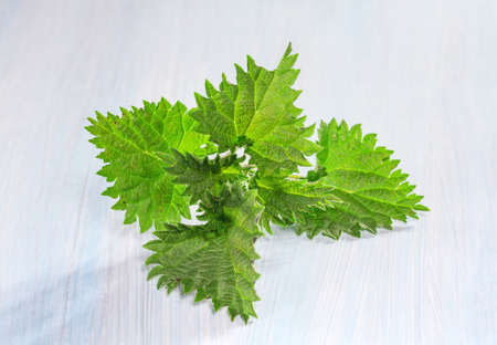 Fresh nettle leaves on a wooden table  photo