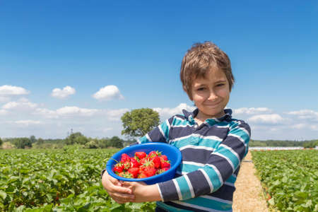 Boy with a bowl of strawberries on a strawberry field photo