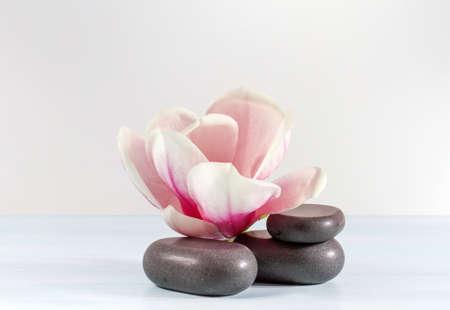 Zen stones with flower magnolia   photo