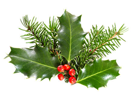 Holly leaves and berries with a pine branch on a white background Imagens