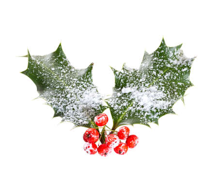 holly leaves and berries isolated on a white background Stock Photo