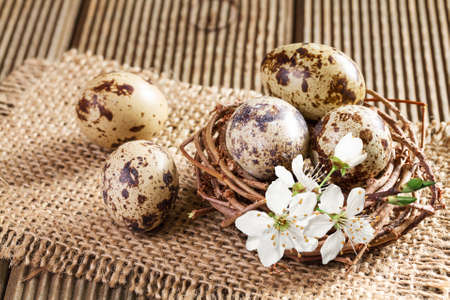 quail nest: Quail eggs in the nest closeup Stock Photo