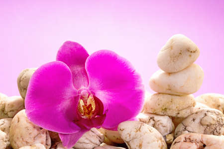 purple orchid: Purple orchid with white pebbles on a pink background