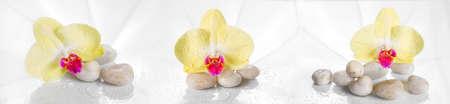orchidee: Panorama orizzontale con orchidee gialle su un vetro bagnato.