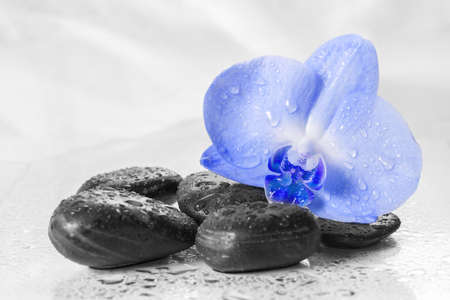 blue orchid: Blue orchid with reflection in water on light background Stock Photo