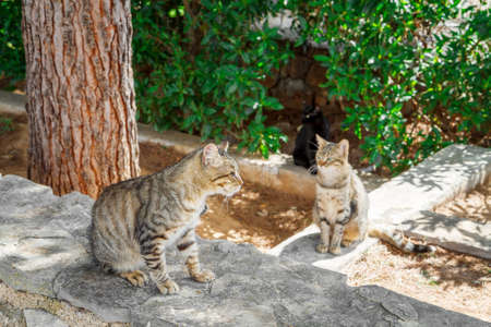 downcast: Street cats are waiting for food