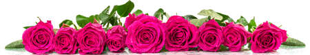 water panoramic: Panoramic image of a bouquet of roses with dew drops Stock Photo