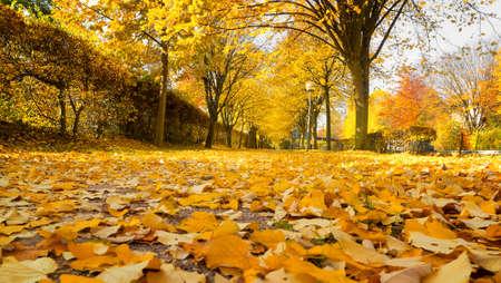 hardwoods: Linden alley in autumn. Shallow depth of field