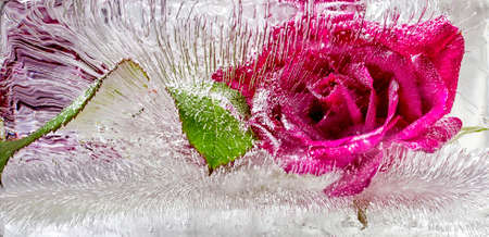 Red rose frozen in ice Stock Photo