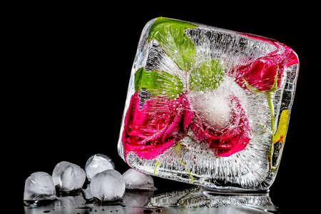 The composition of red roses frozen in ice on a black background Stock Photo