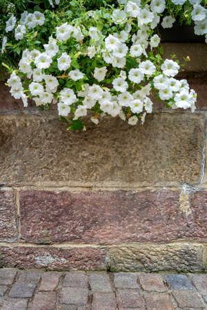 hanging flowers: Brick wall with hanging flowers. Abstract background.