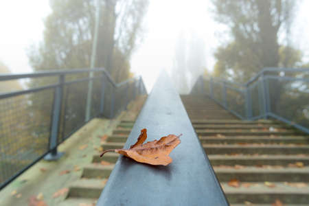 yellowing: Yellowing leaves on the railing of the bridge in foggy weather Stock Photo