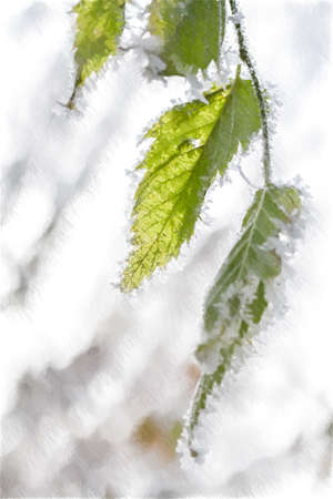 Frozen leaves covered with hoarfrost. Digital illustration in draw, sketch style.
